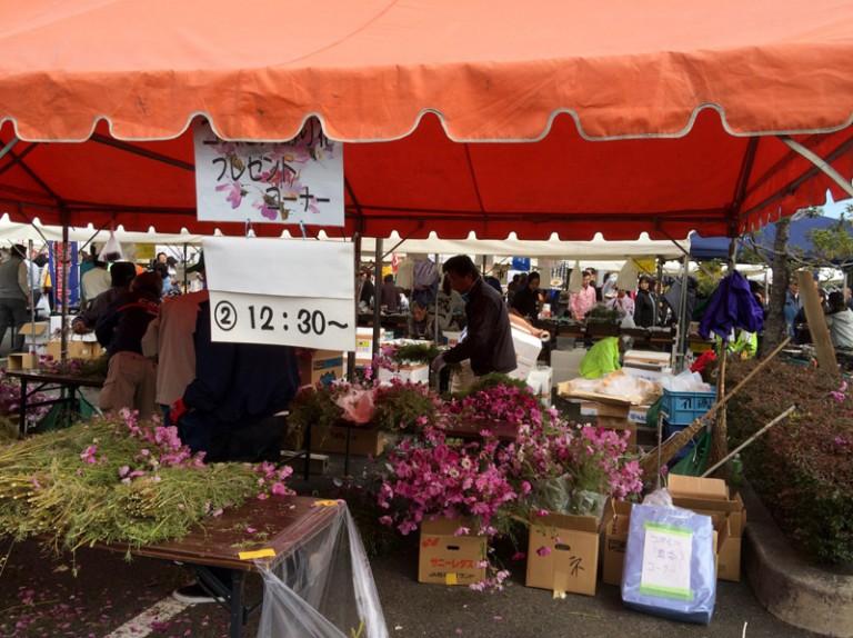 摂津市農業祭 コスモスプレゼント
