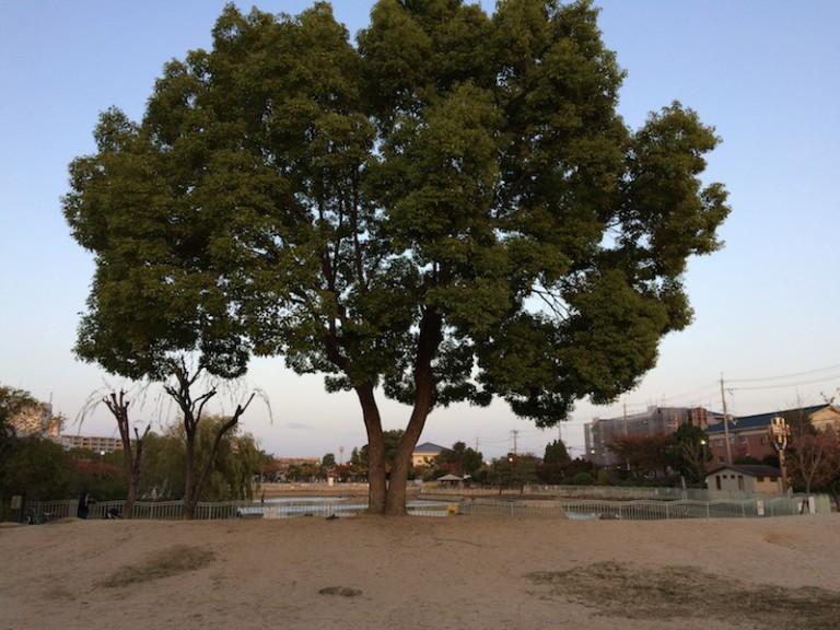 市場池公園 わんぱく広場