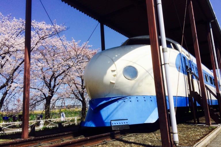 新幹線公園 桜