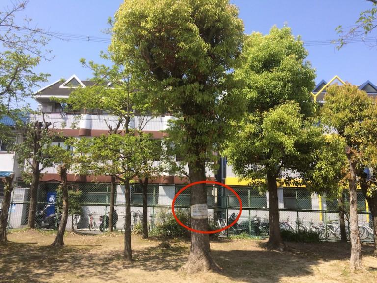 香露園ちびっこ公園 木