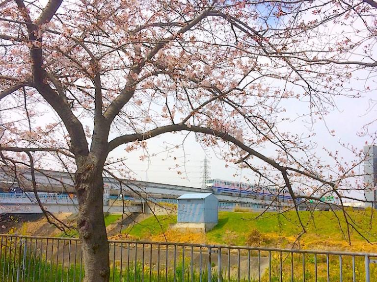 桜とモノレール