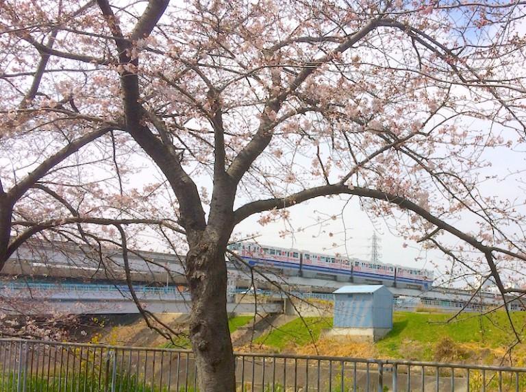 桜とモノレール2