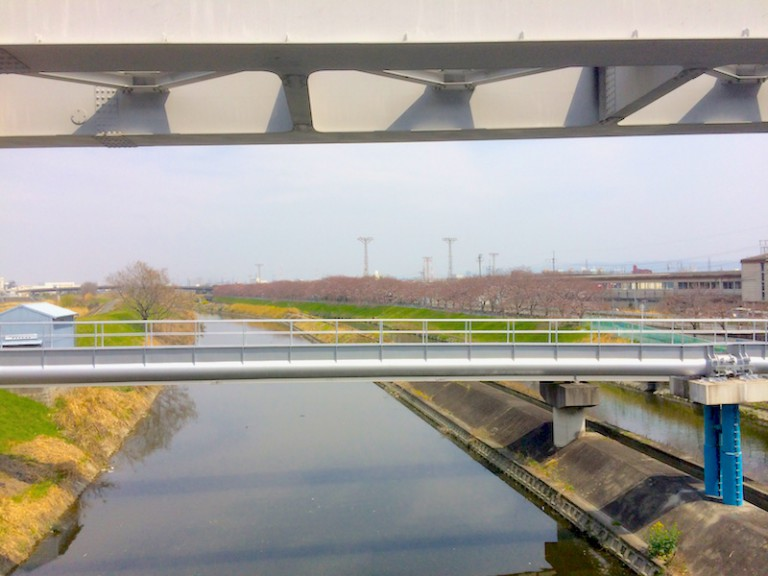 安威川から桜