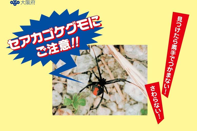 セアカゴケグモ チラシ