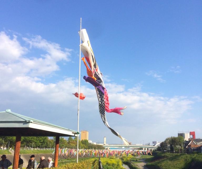河川敷公園 鯉のぼり