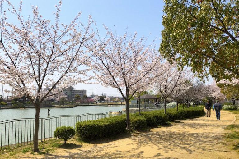 市場池公園 池沿い